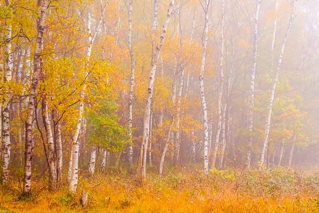 Lyrical Autumn