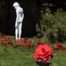 Coup de Ville 2020 - Chasing Flowers