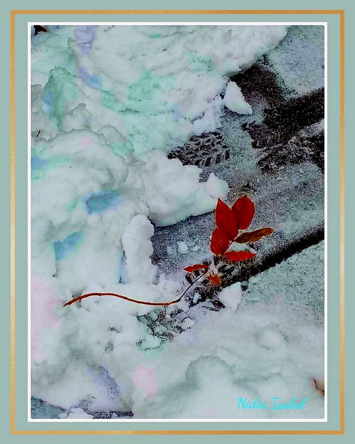 Que bella es la naturaleza, hoy con un poco de nieve ❤️