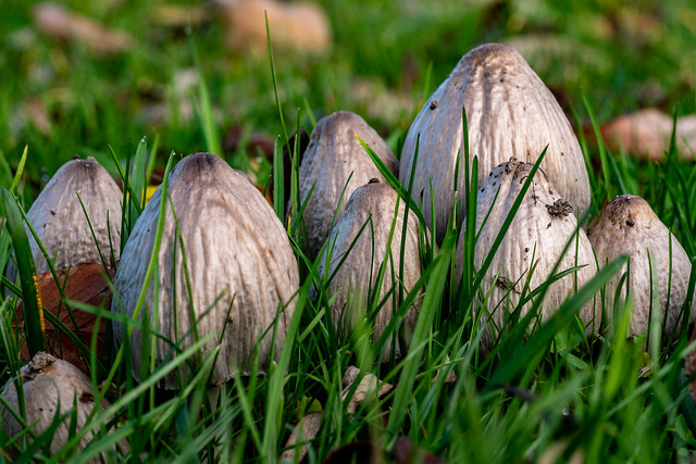 Berlin, Gärten der Welt: Pilze auf einer Wiese - Berlin, Gardens of the World: Mushrooms on a meadow