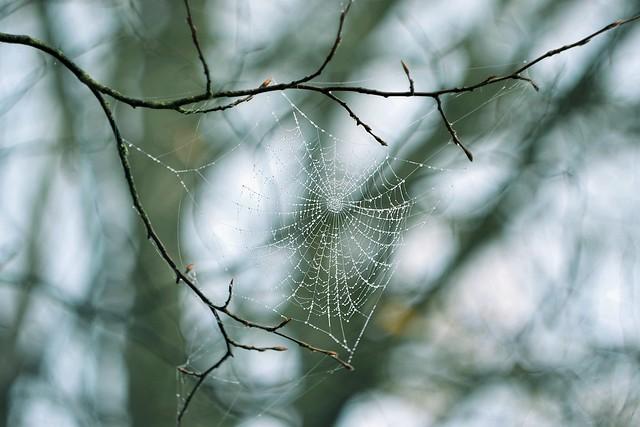 Spider dream