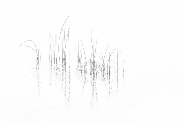 Minimal grass highkey 2