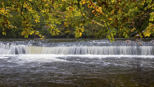 devon plymouth plymbridge woods weir landscape rain weather river plym
