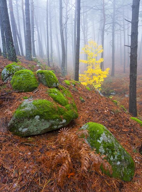 Contrastes: el bosque de de las animas