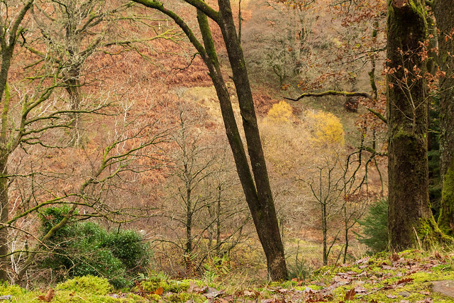 Autumns end