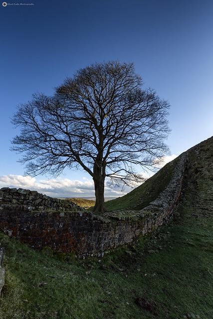 Sycamore Gap - Hadrian's wall at Cuddy's Crags,  Northumberland