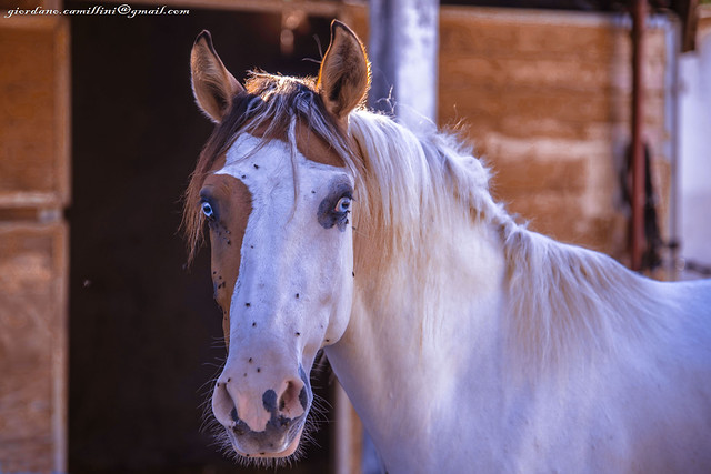 Ask me to show you poetry in motion, and I'll show you a horse.(Ben Jonson)