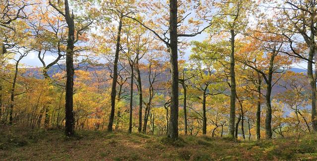 Autumn tree colours