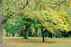 Autumn in the National Botanic Gardens, Dublin