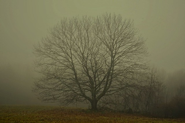 2020-1201Trees-In-The-Mist0004