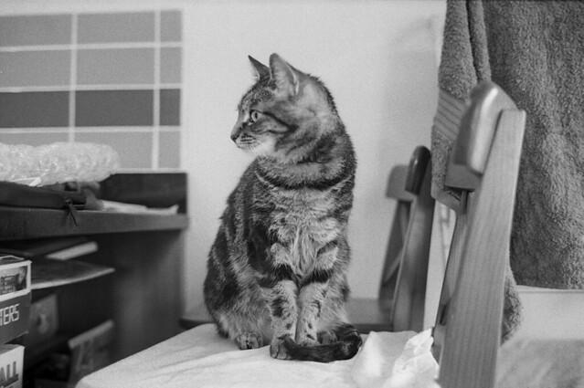 Leica M6, Kodak Tri-X