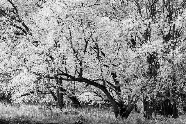Tree#88