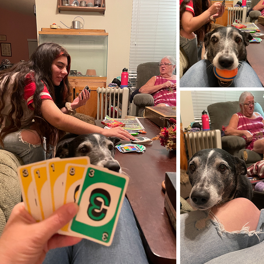 rousing-game-of-uno