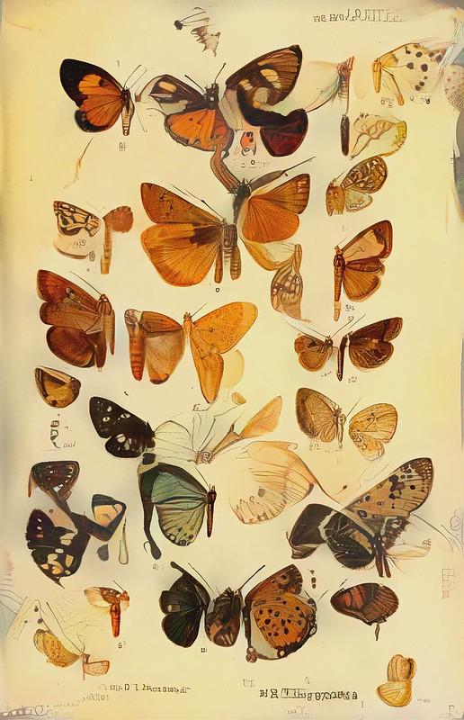 Butterflies_7234