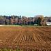 Field near Luterbach