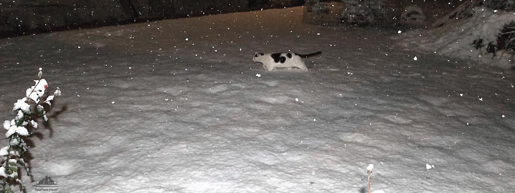 ❅ It's Snowing, Guys!!! It's Snowing❅