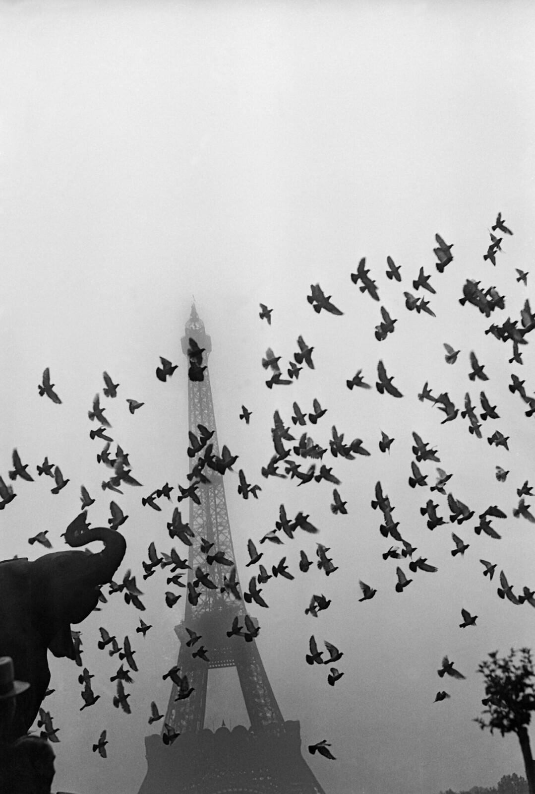 08. 1939. Полет голубей перед Эйфелевой башней, окутанный туманом