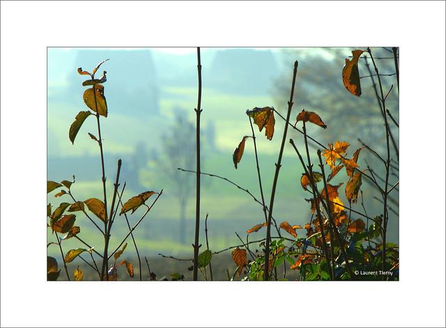 Les sanglots longs Des violons De l'automne Blessent mon cœur D'une langueur Monotone...