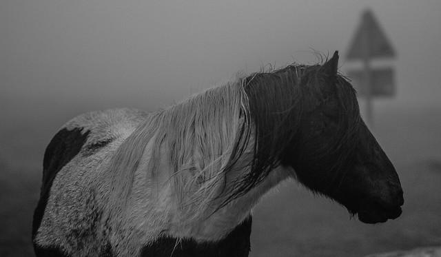 Pony & the fog [ Explore ]