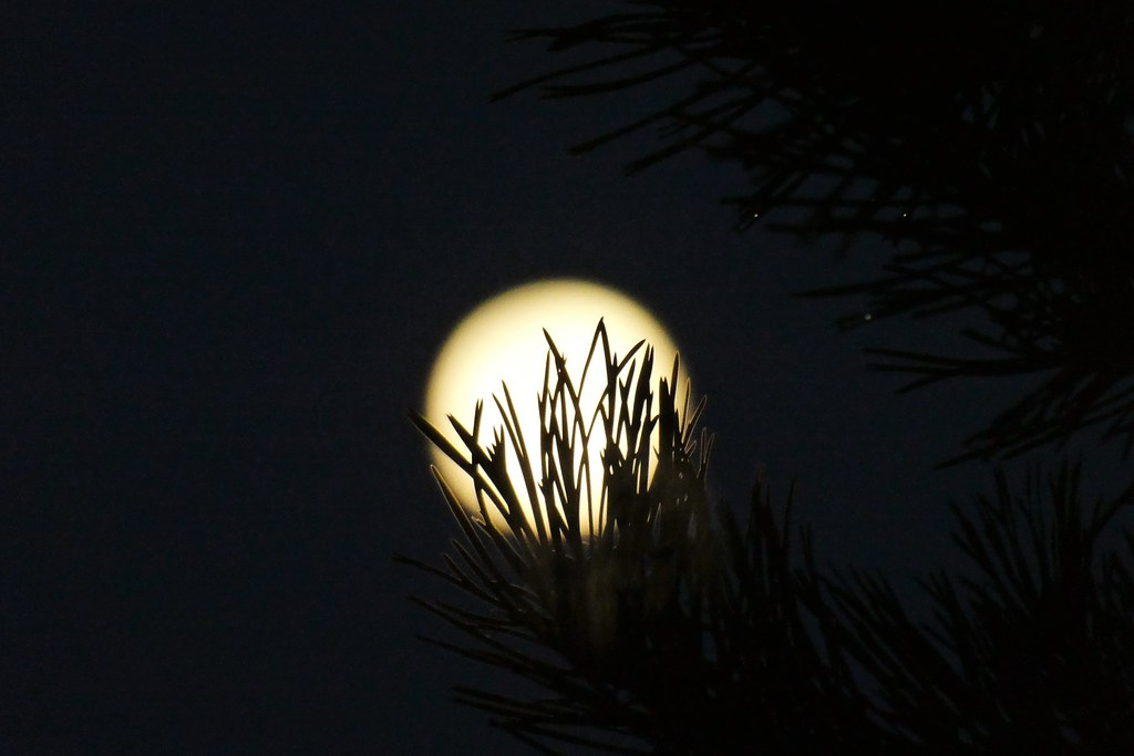 The moon looked so chilly. It tried to hide behind the tree outside our house, but I saw its light. I thought the moon was shy. It looked so beautiful that night.