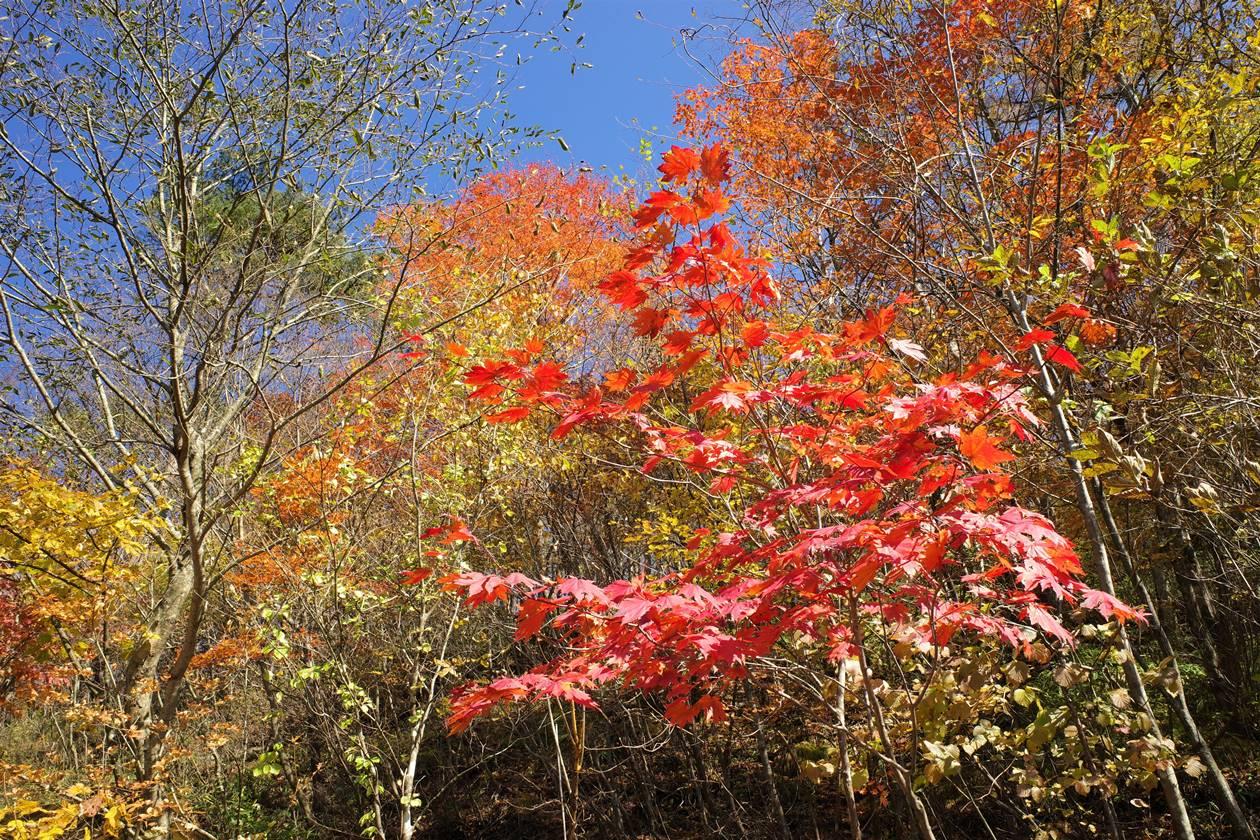 日光・大山の紅葉