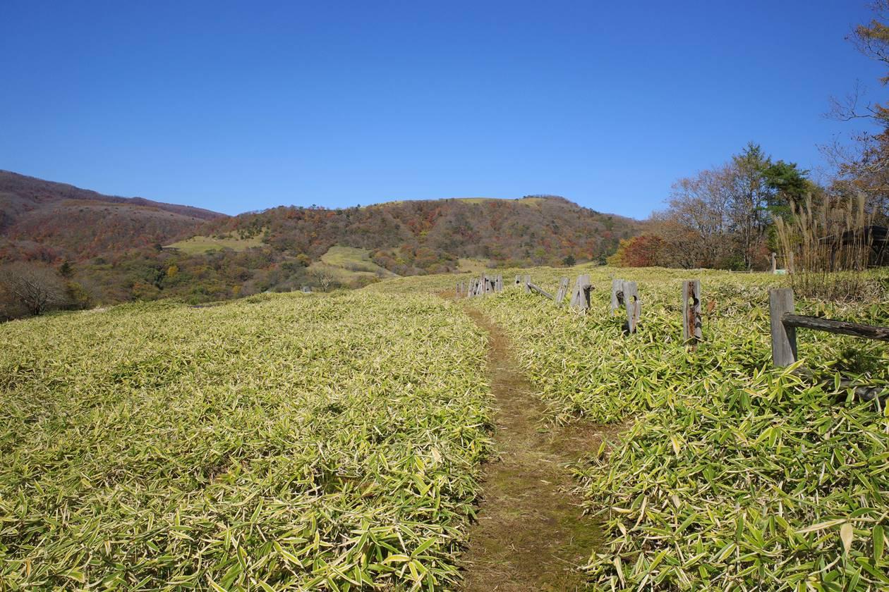 【登山】日光・大山 猫ノ平の草原トレイル