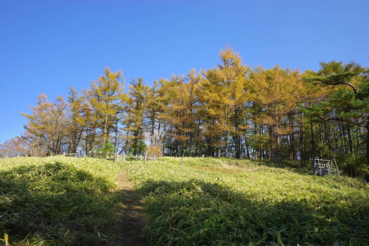 日光・大山登山 猫ノ平の落葉松の紅葉