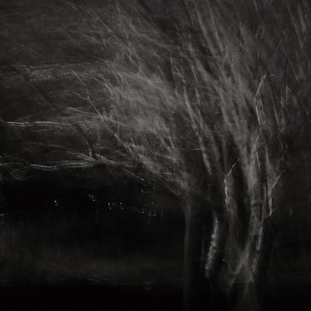 ICM - Tree, Hatchbank Road