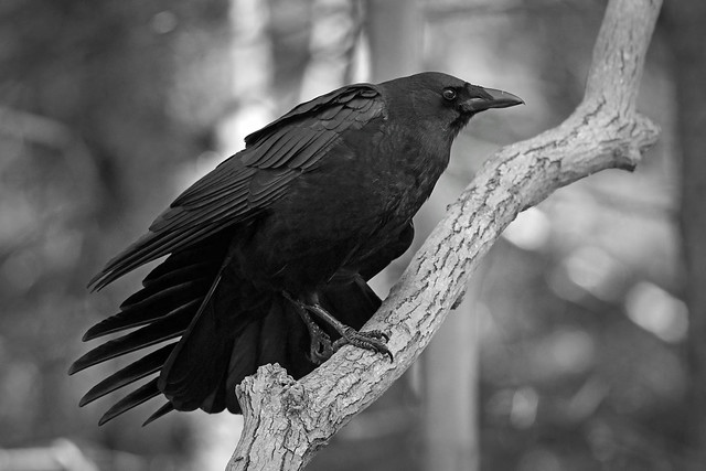 Something to crow about...