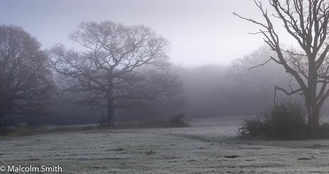 Foggy Morning In Hawk Wood