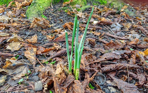 Spring shoots...in December! | by Tony Worrall