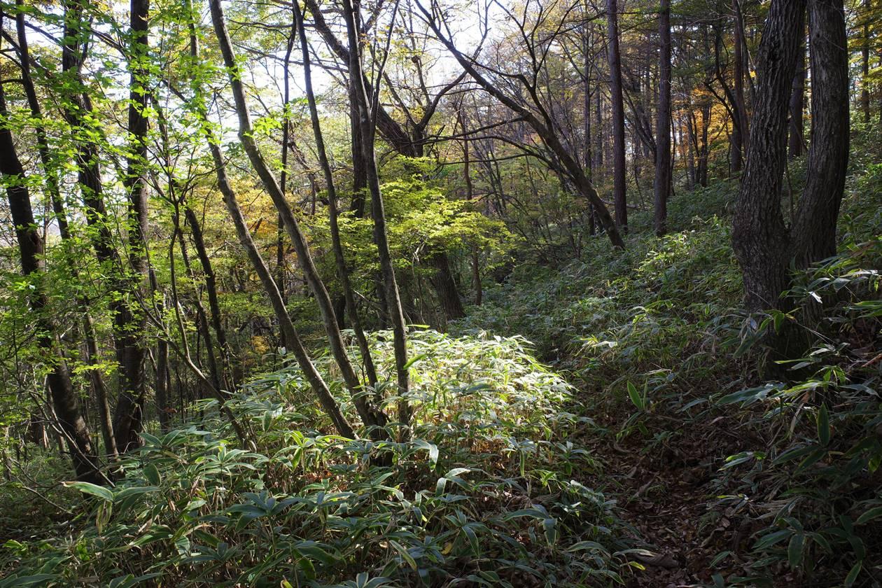 【日光】紅葉の大山登山 戊辰の道