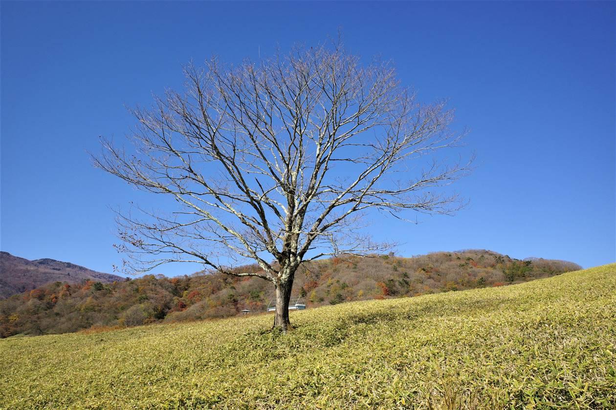 【日光・大山】草原にたたずむ1本の木