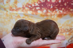 Hershey 6.2oz Just born (21)