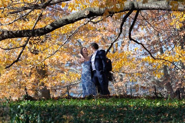 Central Park 11-29-20