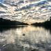 Wellington Lake, Roundhay Park, Leeds-