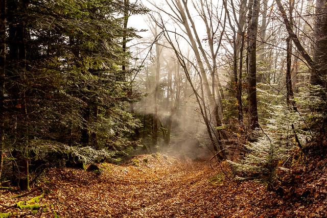 Retour dans le brouillard.