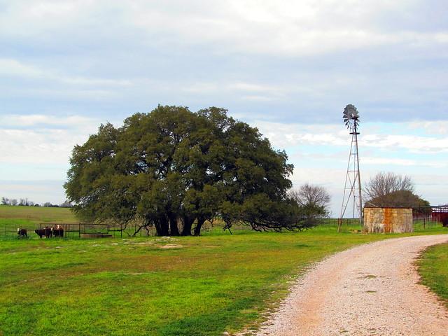 Oak Trees and Windmill HWW