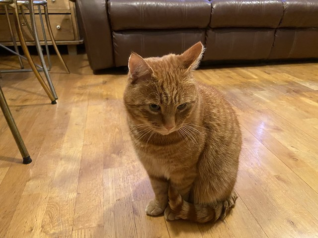 Gulli the Stray Cat