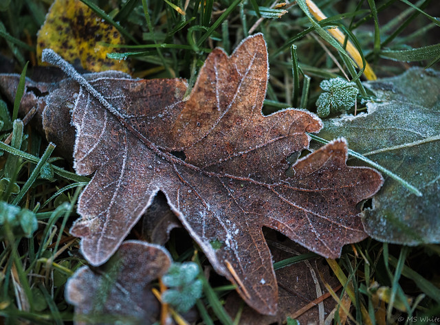 Hello December...nature's frosting underfoot.