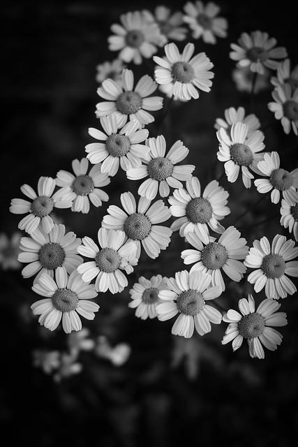 roadside bloom