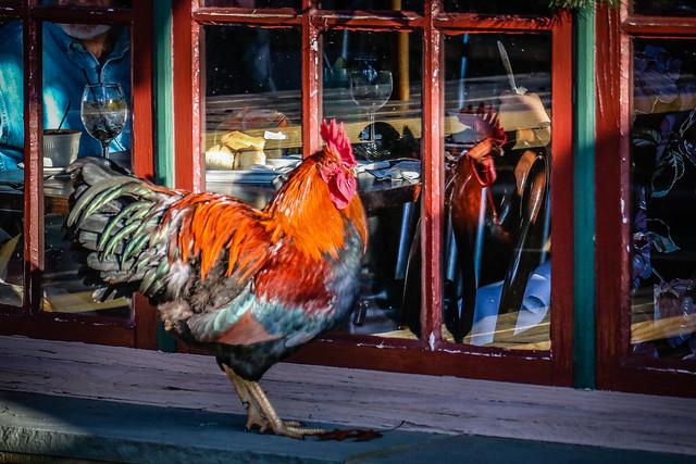 Rooster patrol.