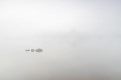 Niebla en la charca