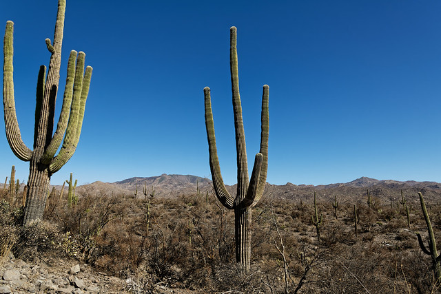 Fresh Ideas for Travel in Tonto National Forest
