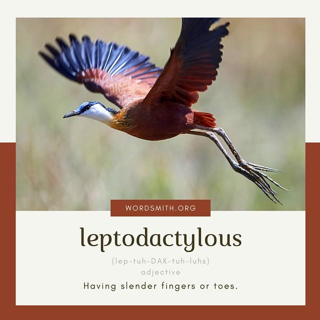 AWAD - leptodactylous