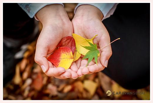 秋の公園 落ち葉のカクテル