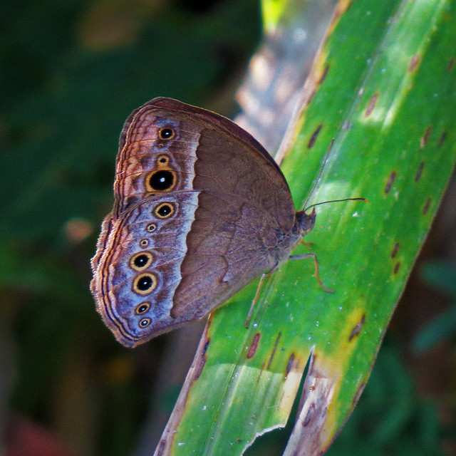 Long Brand Bush Brown at Tampines Eco Green