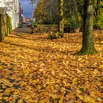 Autumn leaves in Plungington, Preston
