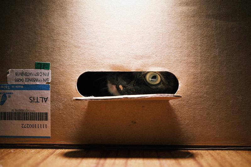躲貓貓|Fujifilm X100V