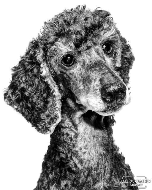 SHOWCASE: Pets